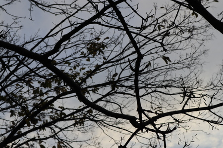 Bare tree branches against gloomy evening sky