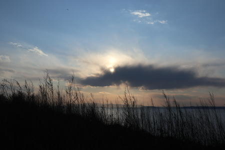 Sunset over the sea. Dry grass against sunset sky. Imagens