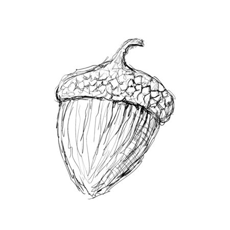 Acorn (oaknut). Hand drawn vector sketch. Illustration in doodle style.