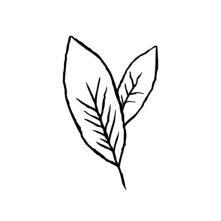Leaves. Hand drawn sketch in doodle style. Vector illustration.