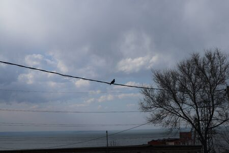 A pigeon sits on an electric wire. Sea landscape on the background. Standard-Bild