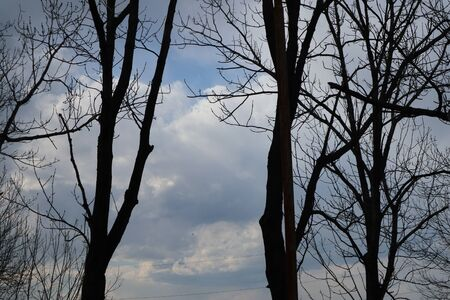 Trees on a background of cloudy sky. 免版税图像