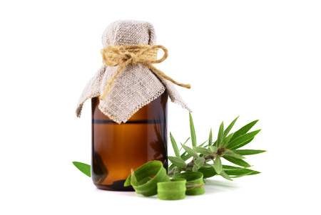 Melaleuca Essential Oil in a Glass Container. Isolated on White Background, with a Tea Tree Brunch. Stock fotó