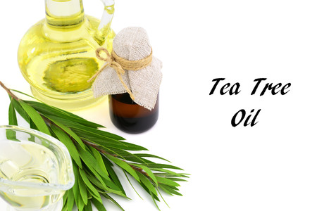 Melaleuca Essential Oil in a Glass Container. Isolated on White Background, with a Tea Tree Brunch. 版權商用圖片