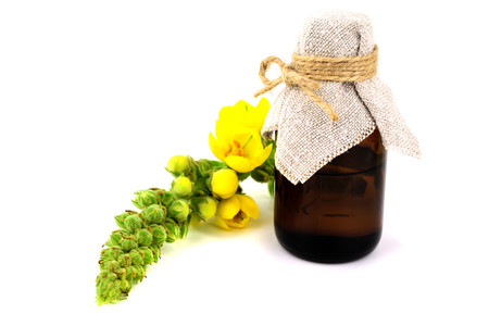 Isolated Verbascum Thapsus Herbal Tincture Extract. Also Great, Common, Woolly, Velvet or Blanket Mullein. Also Beggar's, Moses', Poor Man's, Our Lady's or Old Man's blanket, Feltwort or flannel.