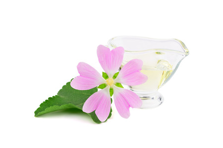 Althaea Officinalis Medicinal Herb Plant Essential Oil in Glass Container. Also Marsh-Mallow, Marsh Mallow or Common Marshmallow. Isolated on White Background.