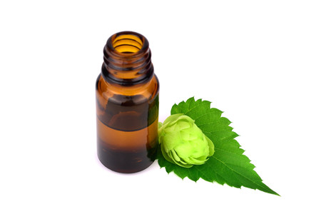 Hop or Hops Medicinal Plant Extract in Glass Bottle. Humulus lupulus Essential Oil. Isolated on White Background. 版權商用圖片