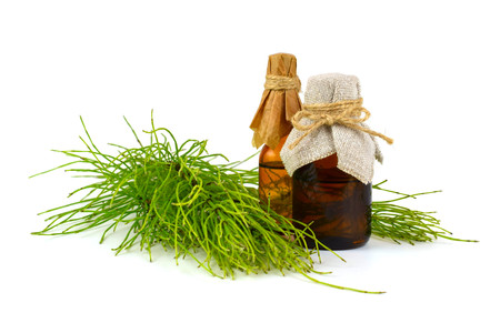 Common Horsetail Medicinal Herb Plant. Pharmaceutical Extracted Infusion Tincture or Essential Oil in a Bottle. Also Equisetum Arvense. Isolated on White Background. Stock Photo