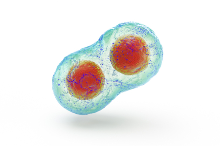 biological cell isolated on whithe background microscope 3D Illustration
