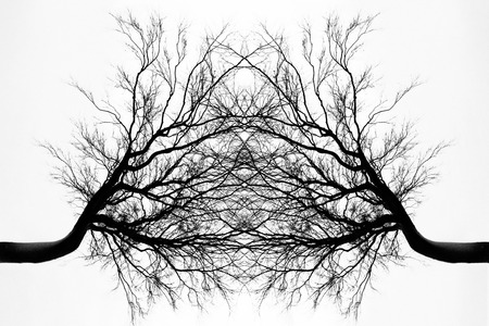 bn: The Tree Connection