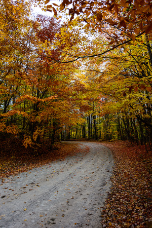 Gorgeous display of fall colors, leaves, red, orange, green and yellow trees coverd empty road as tunel leading your eye through the picture. Pictured Rocks National Lakeshore Munising, MI, USA Reklamní fotografie