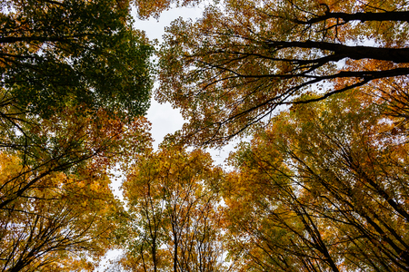 Autumn forest in Pictured Rocks, Munising, MI, USA.  View of colorful treetops.