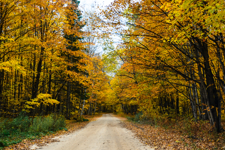 Gorgeous display of fall colors, leaves, red, orange, green and yellow trees coverd empty road as tunel leading your eye through the picture. Pictured Rocks National Lakeshore Munising, MI, USA Reklamní fotografie - 96869477