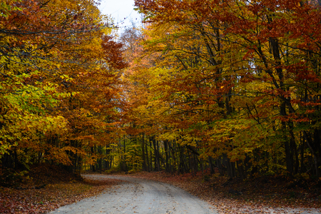 Gorgeous display of fall colors, leaves, red, orange, green and yellow trees coverd empty road as tunel leading your eye through the picture. Pictured Rocks National Lakeshore Munising, MI, USA Reklamní fotografie - 96918183