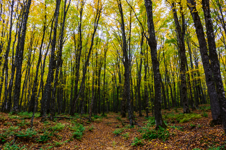 Forest hiking trail in Pictured Rocks National Lakeshore, Munising, MI, USA. Autumn forest with coloful trees.