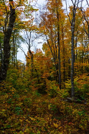 Autumn forest in Pictured Rocks, Munising, MI, USA with colorful trees.