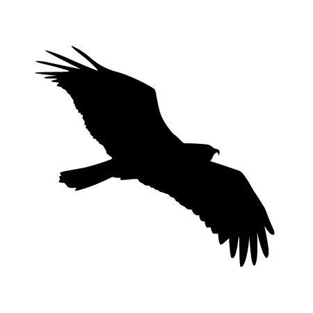 flying kite: Vector silhouette of the Bird of Prey in flight with wings spread.