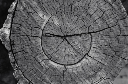 Old wood cut texture Stock Photo - 10952003