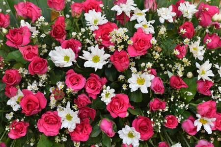 Flores blancas y rojas para los fondos Foto de archivo