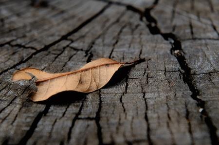 Oto�o Deja sobre fondo de madera