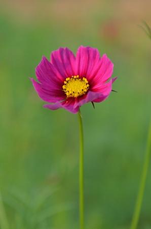 Flores rosadas en un fondo verde