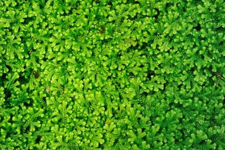 plant background Stock Photo - 13152883