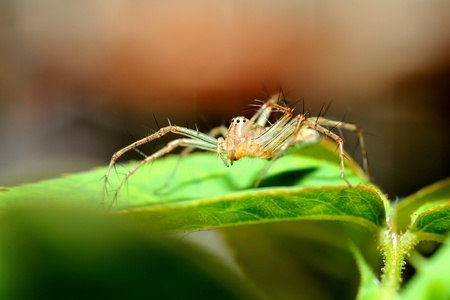 spider on green leaf Stock Photo - 13387876