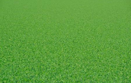 Textura Vibrante Fondo Verde Foto de archivo