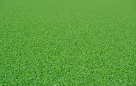 Vibrant Green Background Texture