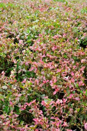 Planta en fondo colorido