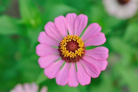 Close up pink flower and foliage Stock Photo