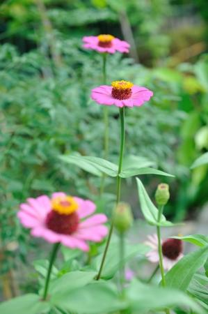 Flores rosadas y follaje Foto de archivo