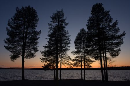 shadowgraph: Firs at sunset Stock Photo