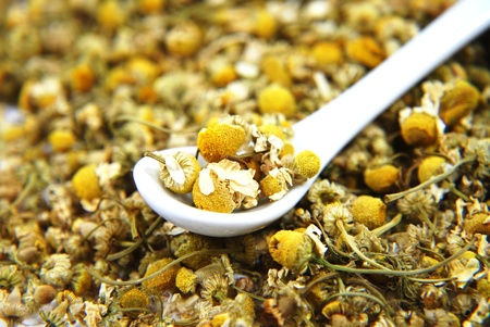 Dried chamomile with white spoon  Stock Photo - 11575411