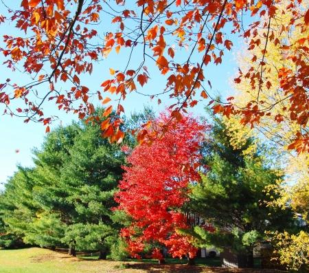 Autumn Landscape Stock Photo - 15564681