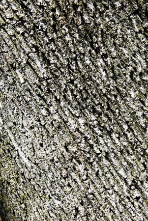 tree bark texture photo
