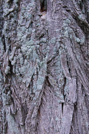 tree bark texture Stock Photo - 15637792