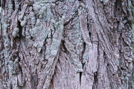 tree bark texture Stock Photo - 15637787