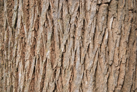 tree bark texture Stock Photo - 15690485