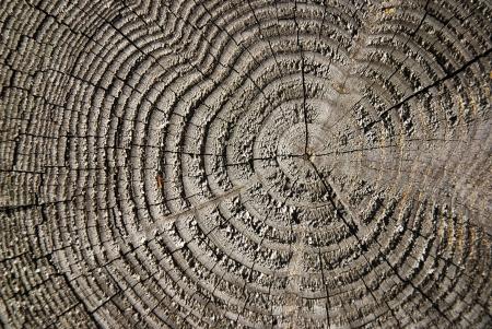corrosion: tree circle texture