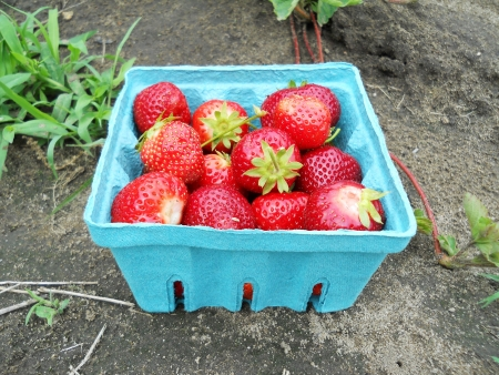 strawberry in the box photo