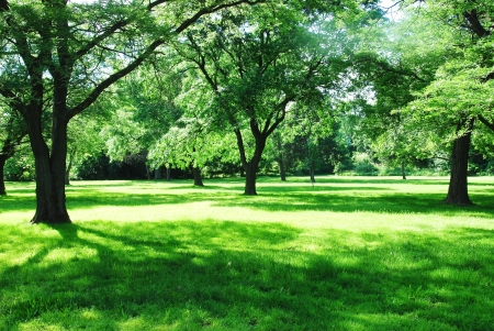 grass area: park in summer