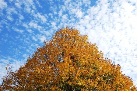 autumn tree Stock Photo - 15936060