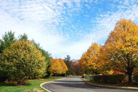 Autumn trees of blue clouds sky background photo