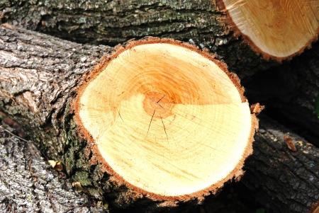 wood cut: wood cut