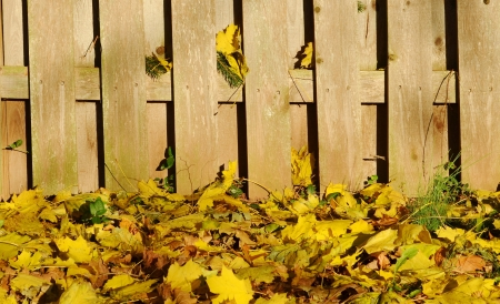 autumn leaves and fence Stock Photo