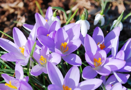 Crocus flowers in the park Stock Photo - 17046096