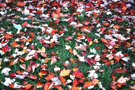 Leaves floor