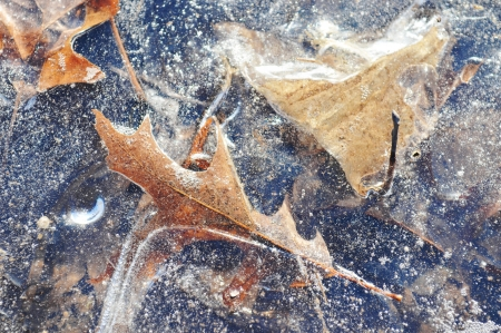frozen leaves Stock Photo - 17287050