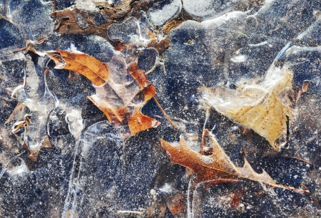 frozen leaves Stock Photo - 17278680